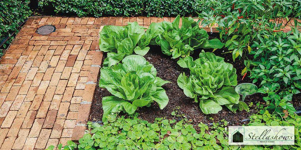 ปลูกผักอะไรในบ้าน ได้กินทันใจบ้าง มาดูกัน