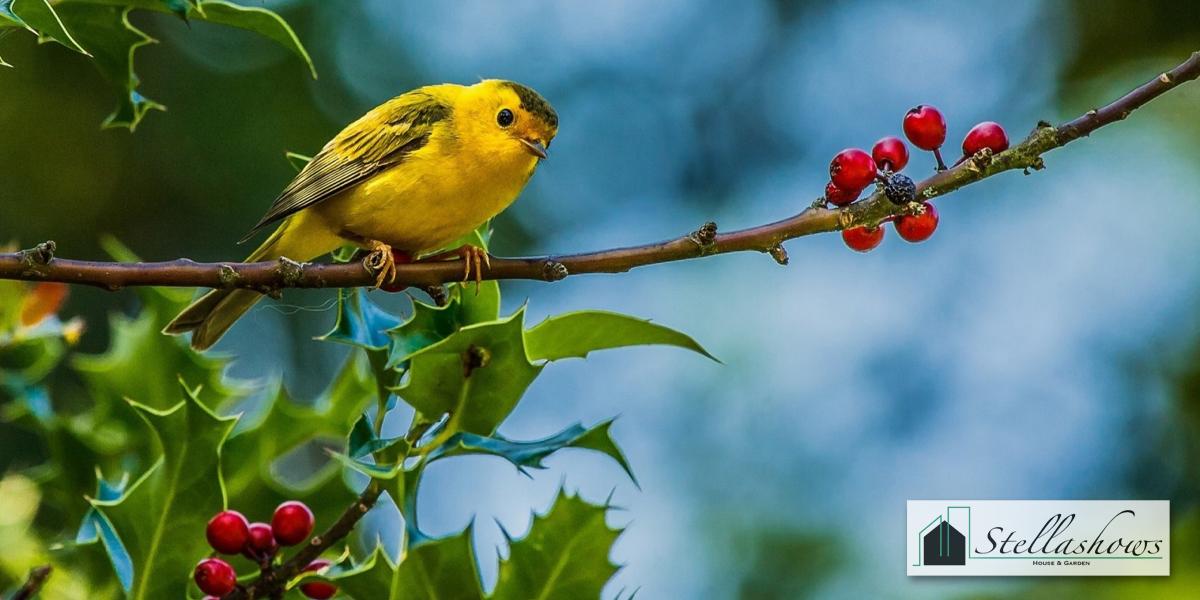 ไอเดียจัดสวนสวยให้มีนกมาร้องเพลง
