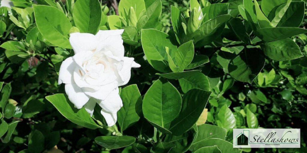 5 ดอกไม้สำหรับจัดสวน กลิ่นหอมฟุ้งทั่วบ้าน