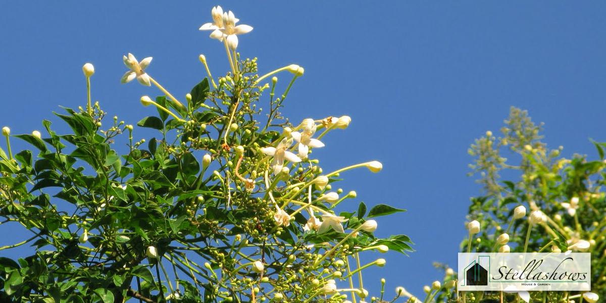 5 ต้นไม้นิยมจัดสวย ที่ทุกบ้านต้องมี