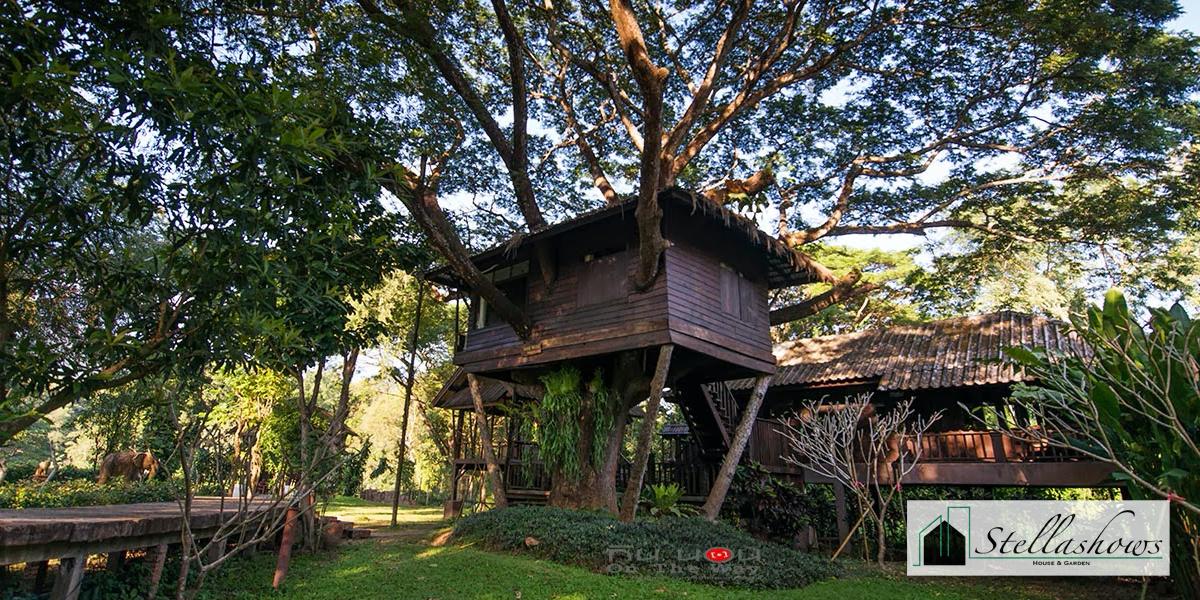 บ้านต้นไม้ในฝัน