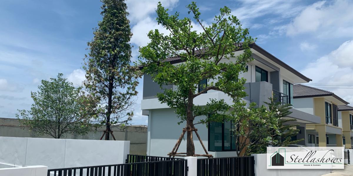 รวมต้นไม้ล้อมยอดนิยมที่น่าปลูกไว้ในบ้าน