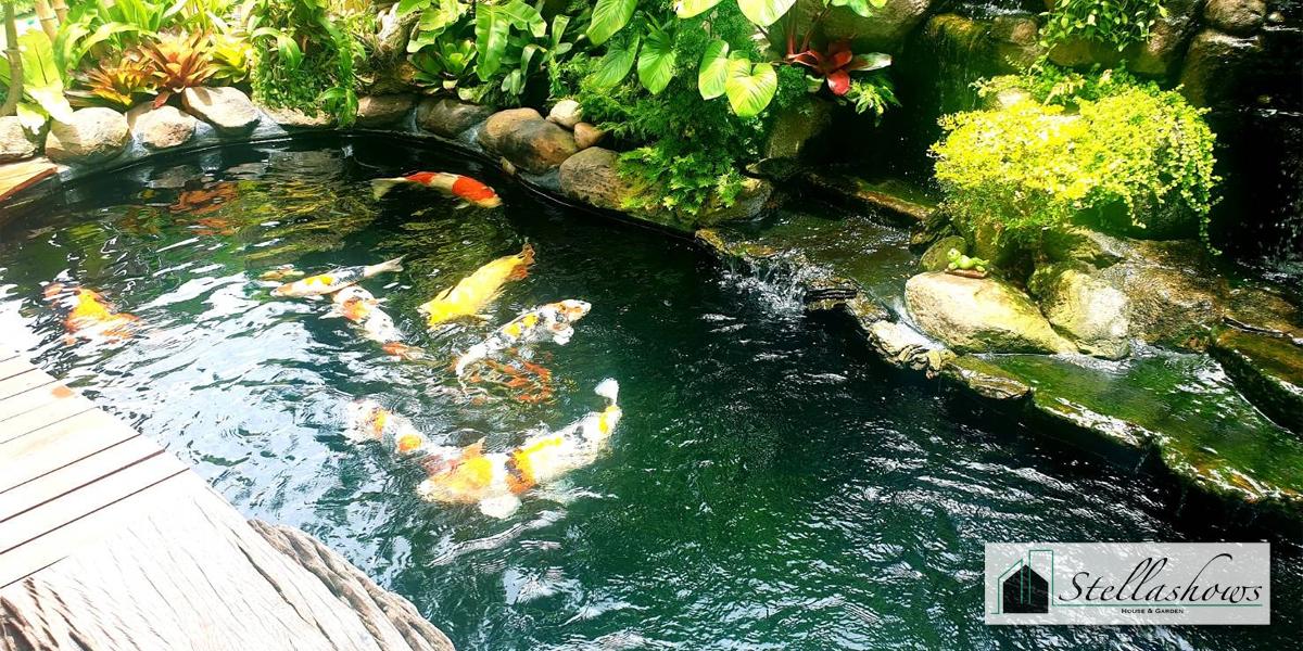 อ่างเลี้ยงปลาแบบไหนที่เหมาะกับการจัดสวนหย่อมเล็ก ๆ