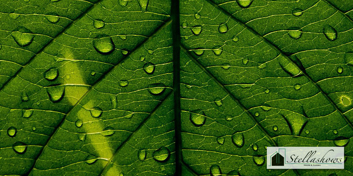 3 เคล็ดลับดูแลสวนหย่อมช่วงเข้าหน้าฝนไม่ให้ชำรุดได้ง่าย
