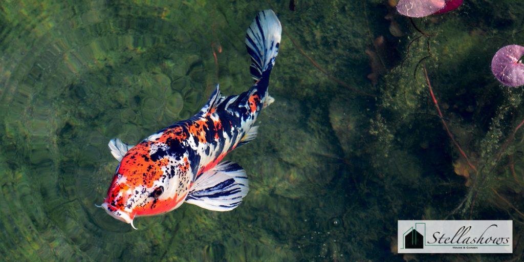 4 สายพันธุ์ปลาที่เหมาะสมสำหรับเลี้ยงในอ่างสวนหย่อม
