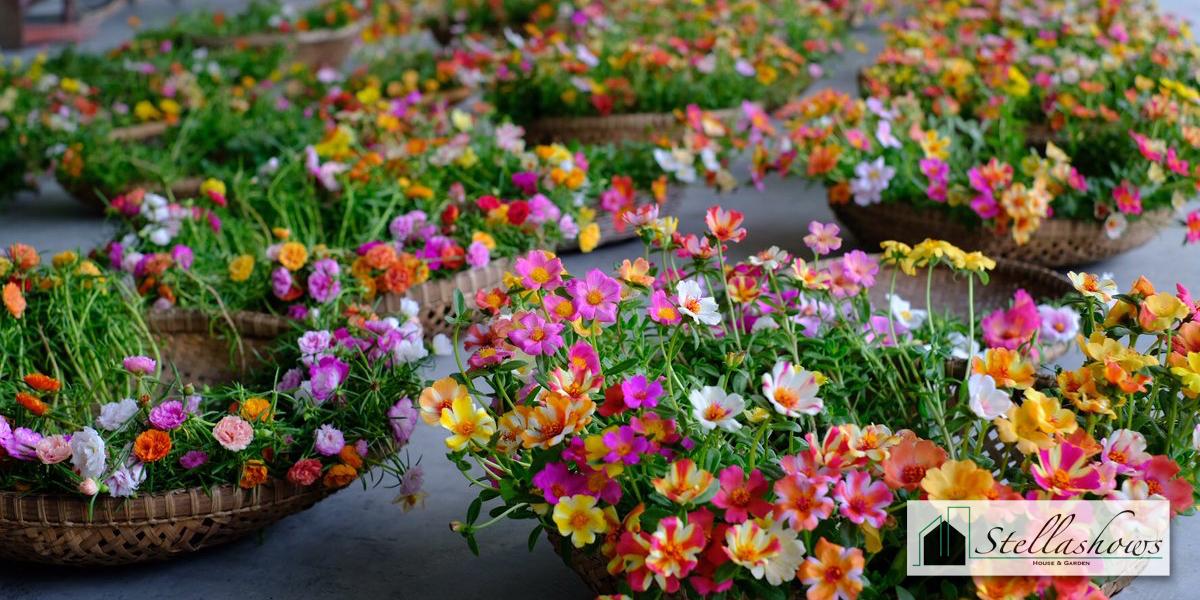 5 อันดับไม้ดอกสีสวยที่น่านำมาปลูกในบริเวณบ้าน